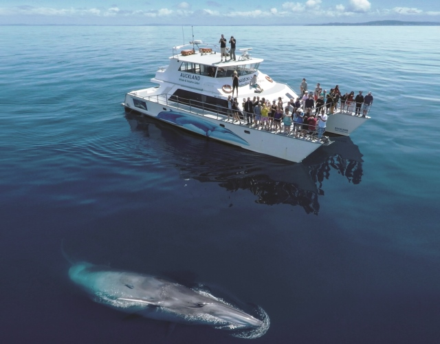 Marine Mammal Eco-Safari - GIFT VOUCHER