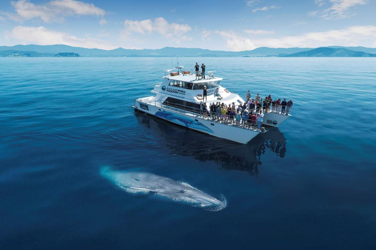 Whale & Dolphin Watching Conservation Experience - Private Charter