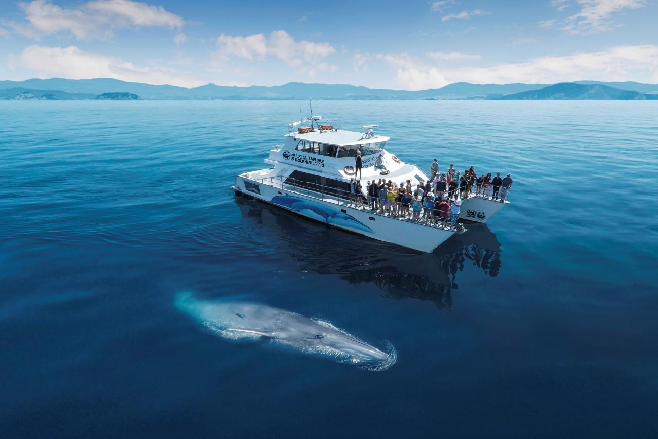 新西兰自然保护周中文鲸豚教育游船之旅