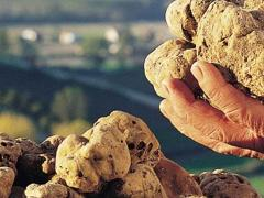 Private Truffle Hunt with Lunch & Wine Experience in Tuscany