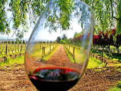 Private Tuscan Hills Tour: Chianti Classico Wine Tasting