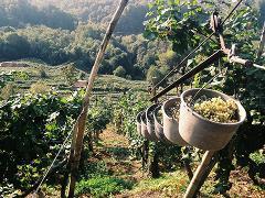 Private Prosecco Wine Day Trip from Venice