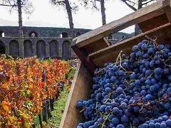 Private Pompeii & Wine Tour