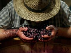 Private Wine Making Experience in Tuscany