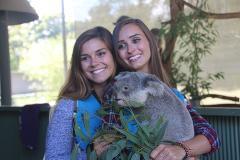 Hold a Koala Tour - Including Serpentine Falls (Cuddle a Koala)