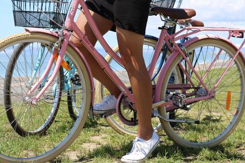2 Hour Napier Local Guided Bike Tour