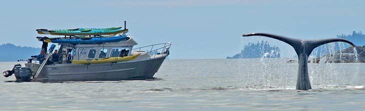 Boat Shuttle per person