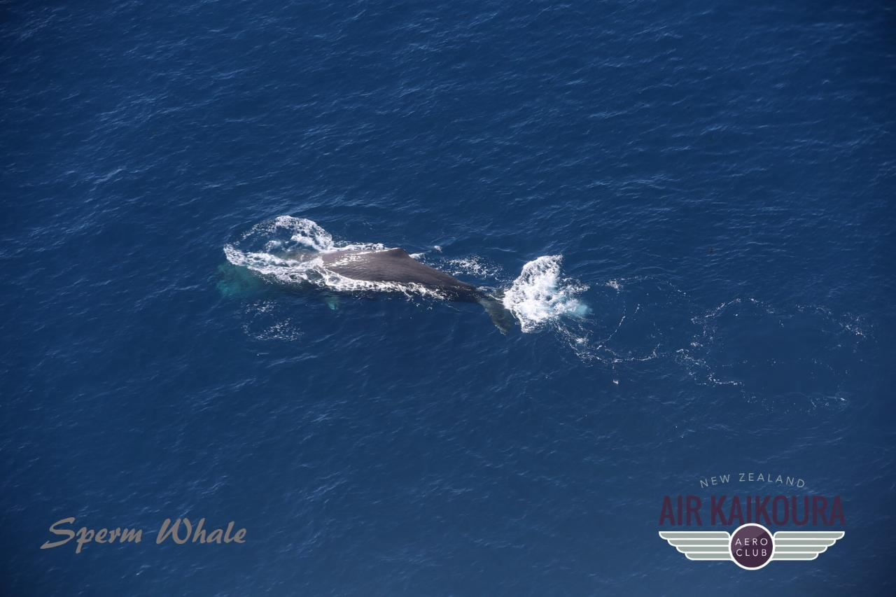 Whale Watch Flight