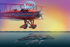 Sunset Biplane Whale Watching and Bay Tour