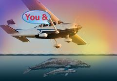 Sunset Whale Watching and Tour:  Group Cessna Tour