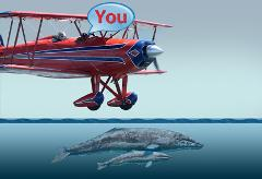 Biplane Whale Watching and Bay Tour