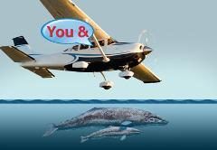Whale Watching and Tour:  Group Cessna Tour