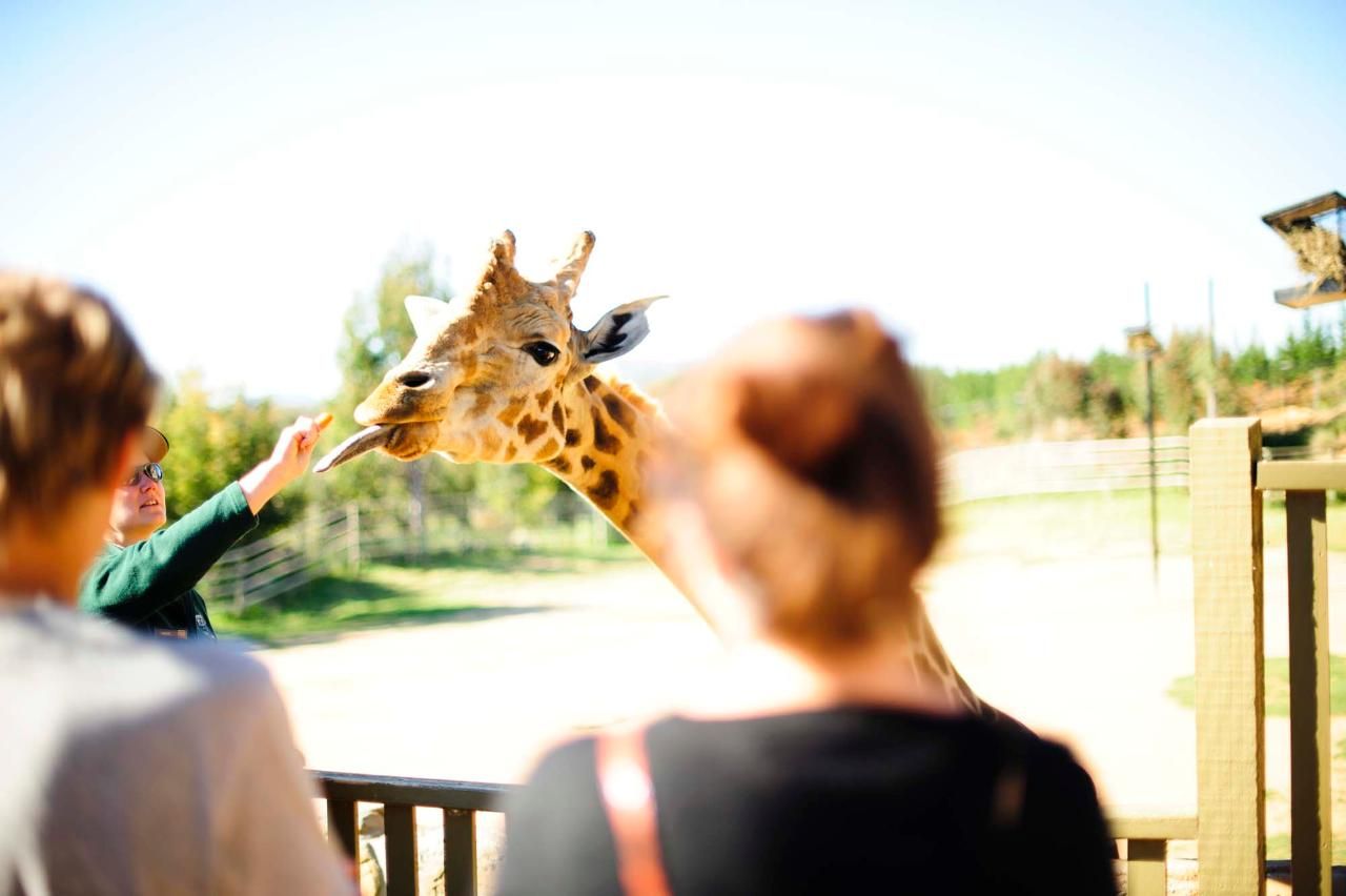 Zooventure Tour
