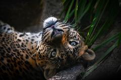 Focus on Wildlife Tour