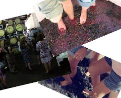 Stomping the grapes