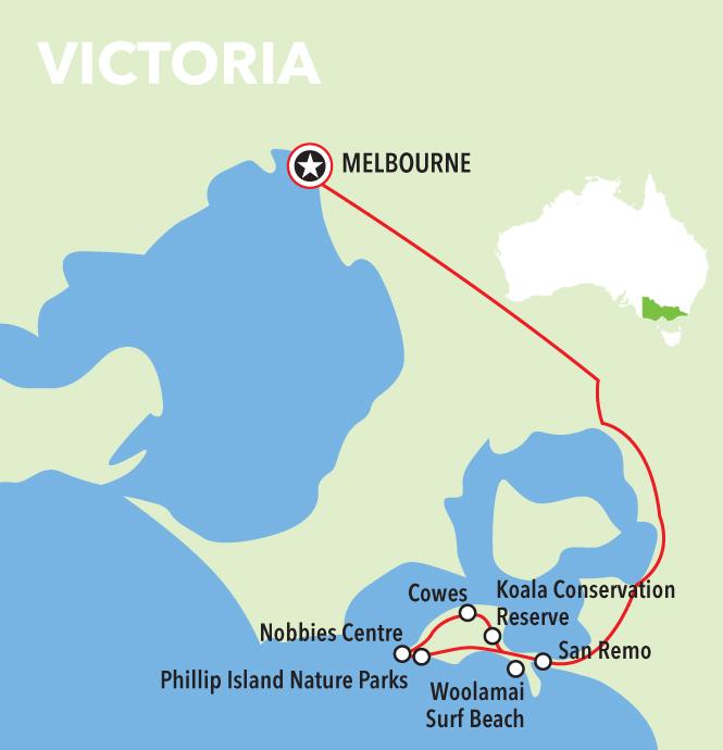 Autopia Tours: Phillip Island & Koala Highlights - Penguins General Viewing