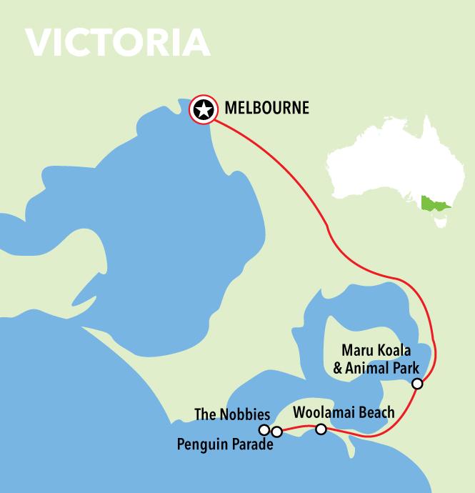 Autopia Tours: Phillip Island & Koala Highlights - Penguins Plus Viewing