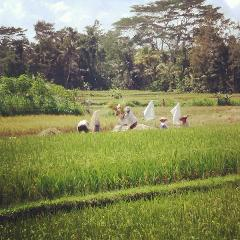 Rice Field & Village Exploration Walk