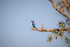 Wildlife & environments of Greater Darwin