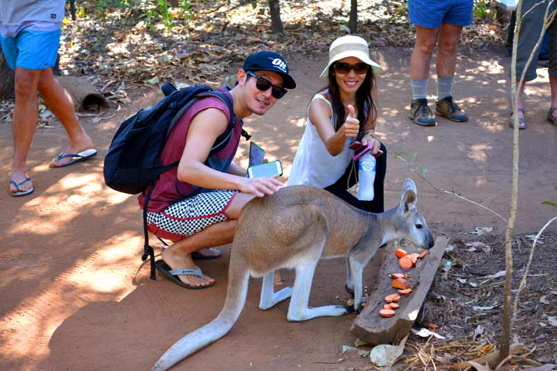 Cruise Ship PUBLIC Tour - Territory Wildlife Park tour with dedicated guide