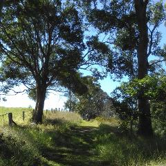 Bushwalkers' Adventure Half-Day - Sunshine Coast Hinterland Bushwalk Family Special Package