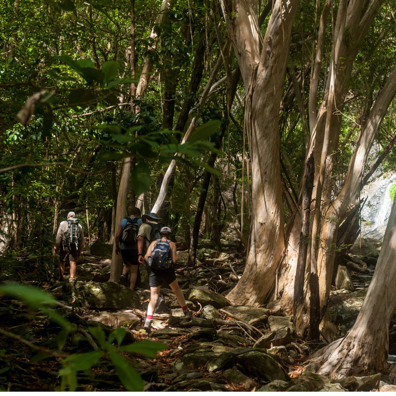 Bushwalkers' Adventure - Full Day