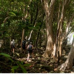 Bushwalkers' Adventure - Full Day