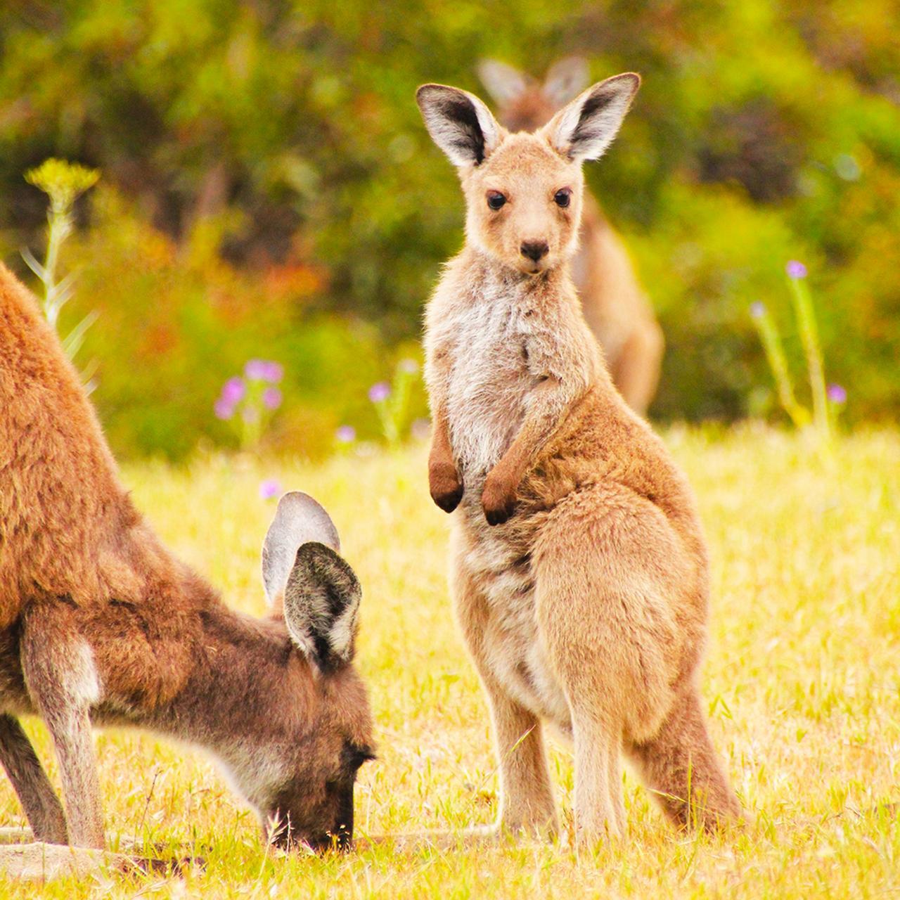 Road to Kangaroo Island