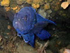 SDI Marine Ecosystems Awareness Program