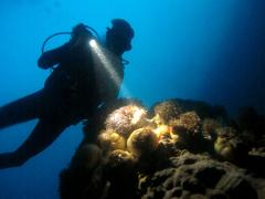 Guided Night Shore Dive