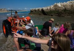 Gannet Tour - Black Reef (3hr tour) - Note:  This tour is only available on certain days