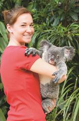 Visit Kuranda - Koala Gardens with Koala photo Optional Extra