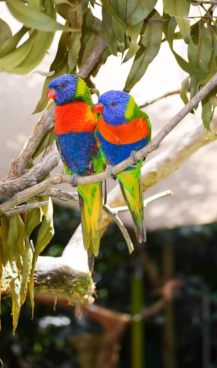 Port Douglas & Wildlife Habitat FULL DAY TOUR