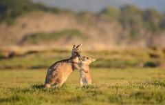8 Day Tasmanian Wildlife Encounter small group tour