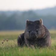 6 Day Tasmanian Wilderness and Wildlife Encounter