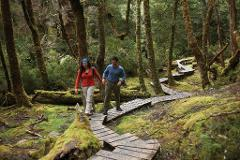 7 Day Tasmanias Wilderness small group tour