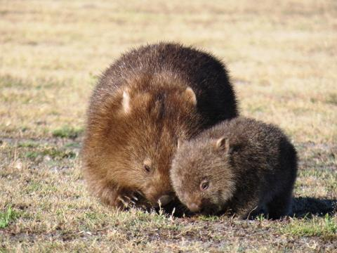 8 Day Tasmanian Wildlife and Wilderness Encounter Tasmania Australia