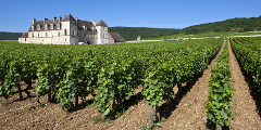 Private Burgundy Tour- Pommard Tasting