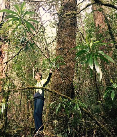 """Experience…""""Lost Mines – Ancient Pines"""" Tasmania Australia"""