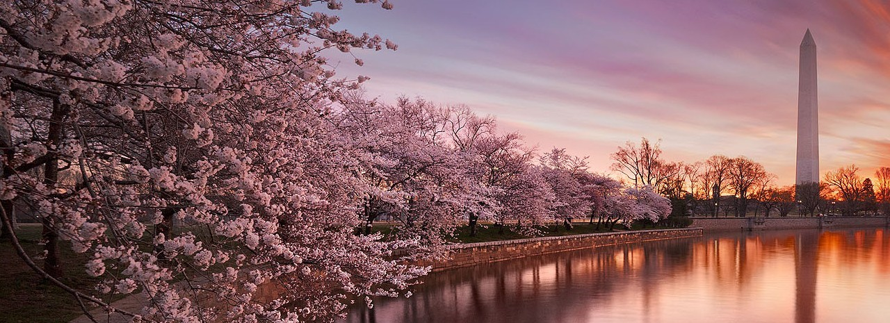 CONCIERGE - CHERRY BLOSSOMS GALORE TOUR | MARCH 18 - APRIL 15