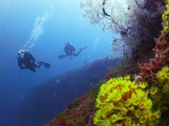 Full Day tour: Double dive trip for qualified divers