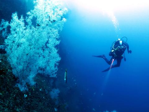 Afternoon single dive tour for qualified diver