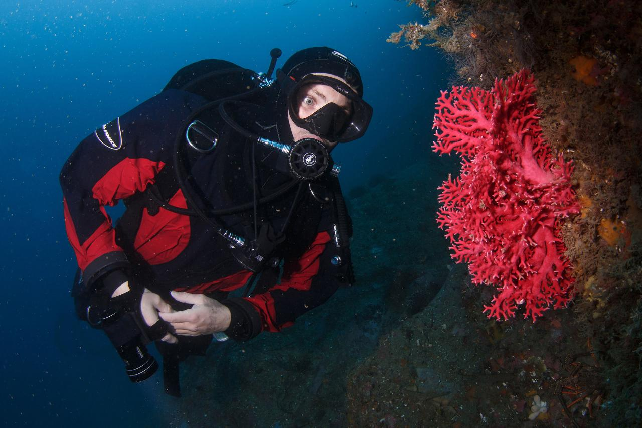 Morning departure: Double dive trip for qualified divers