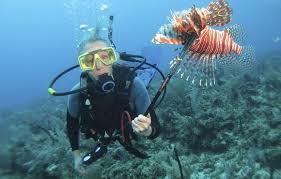 Loin Fish hunt shore dive (weekly schedule)