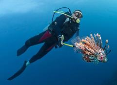 LionFish Xperience Shore Dive Location House Rif