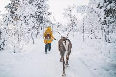 The Sami & Reindeer Experience (Dec-March)