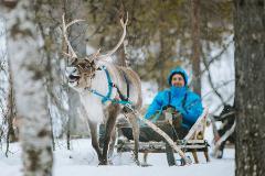 Arctic Reindeer Sledding