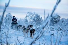 Kiruna - Dogsledding in the Arctic