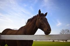 Vineyard Horseback Riding with VIP Wine Tasting