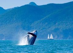 Youth 5-day Voyage - Hervey Bay to Brisbane 30th Sept - 4th Oct